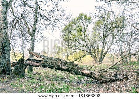 Tree Broken By The Wind