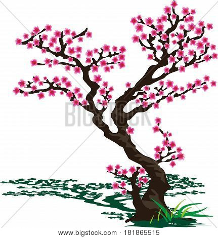 Japanese Sakura. Flowering cherry tree in a vector form on a transparent background