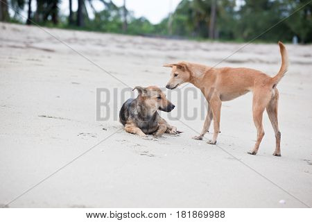 Dogs  at the sandy beach, summer vacantion