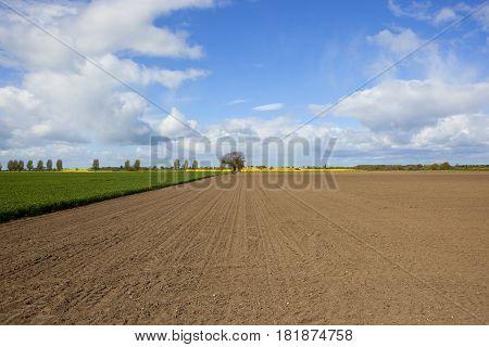 Plowed Field In Springtime