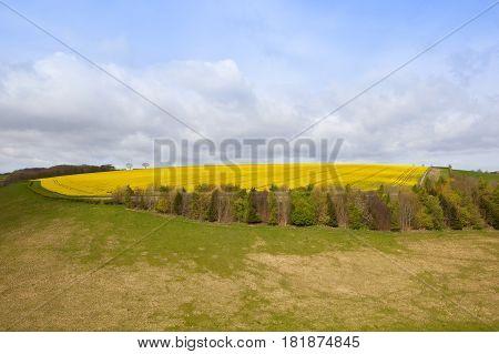 Hillside Oilseed Rape Crop