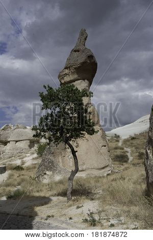 Rock and tree in Goreme, Capadocia, Turkey
