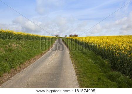 Rural Road And Oilseed Rape Crop