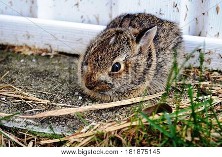 Young baby bunny trying to look small and hide