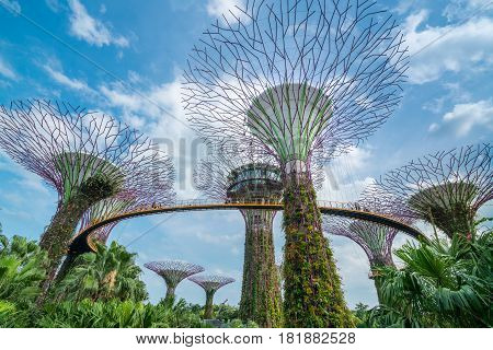 SINGAPORE - FEBRUARY 10 2017 : Singapore Supertrees in garden by the bay under blue sky at Bay South Singapore. Cityscape and city skyline in Singapore.