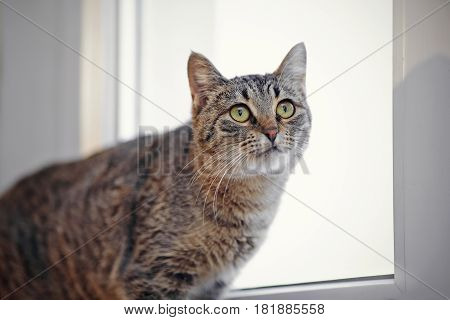 Portrait of a striped cat against the background of a window.