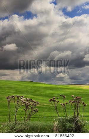 Springtime.Between Apulia and Basilicata: hilly landscape with green cornfields.ITALY. Play of light on cultivated field dominated by thunderclouds.