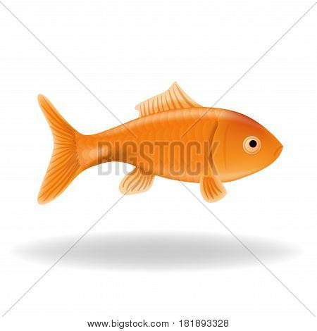 Vector goldfish isolated on a white background