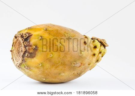 Tuna (Opuntia ficus-indica) isolated in white background