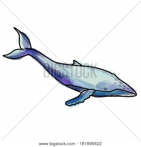 Grunge humpback whale illustration on a white background