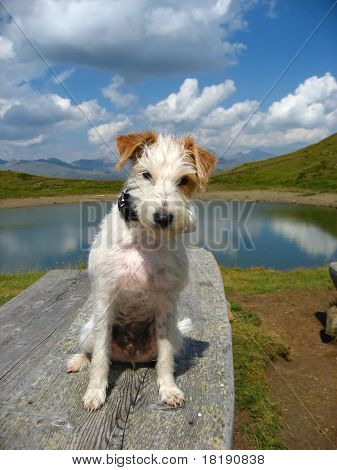 Dog in alpine scenery