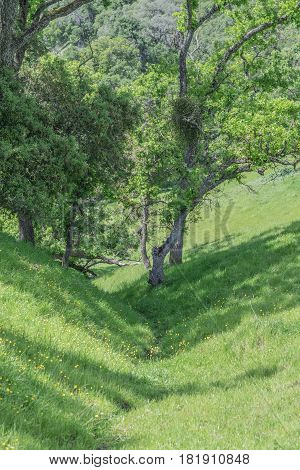 Meadow Crevice: green meadow, with crevice, trees and wild flowers
