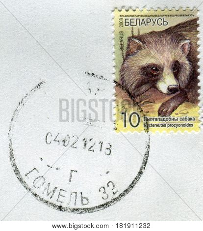 GOMEL, BELARUS, APRIL 15, 2017. Stamp printed in Belarus shows image of  The Nuctereutes procyonoides, circa 2008.