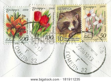 GOMEL, BELARUS, APRIL 15, 2017. Stamp printed in Belarus shows image of  The Lilium hybrida, Tulipa gesneriana, Nuctereutes procyonoides and Narcissus hybridus, circa 2008.