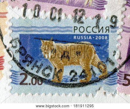 GOMEL, BELARUS, APRIL 15, 2017. Stamp printed in Russia shows image of  The lynx is any of the four species within the Lynx genus of medium-sized wild cats, which includes the bobcat, circa 2008.