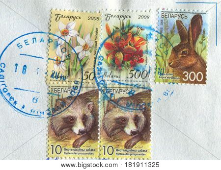 GOMEL, BELARUS, APRIL 15, 2017. Stamp printed in Belarus shows image of  The Lilium hybrida, Nuctereutes procyonoides and Lepus europaeus, circa 2008.