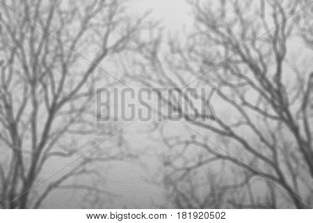 abstract background of shadows branch tree on white concrete rough texture