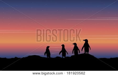 Penguin on hill scenery of silhouettes illustration