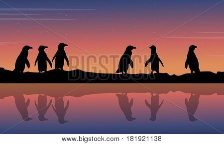 Penguin reflection on water scenery collection stock illustration