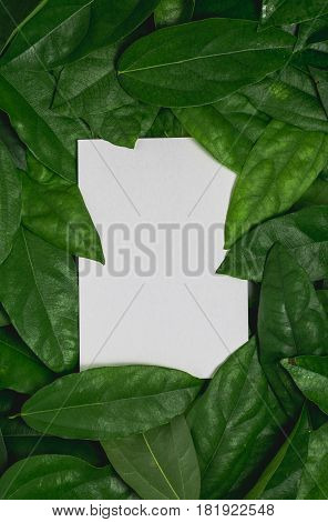 Frame and space for text with paper card on green leaf.