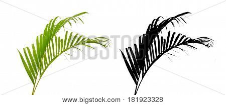 Green palm leaf and silhouette isolated on white background.