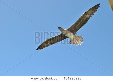 Bird flying A bird flies in the air