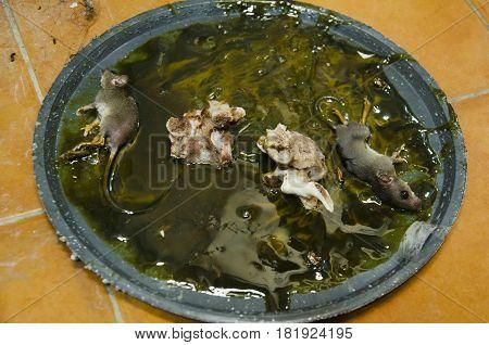 Rats On Stick Glue Mousetrap