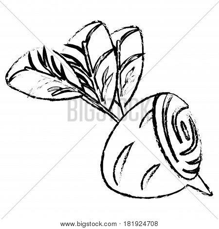 beet half food diet healthy sketch vector illsutration eps 10