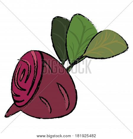 beet food diet healthy vector illsutration eps 10