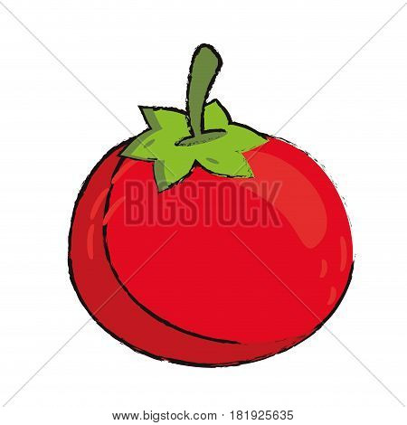 tomato food diet healthy vector illsutration eps 10