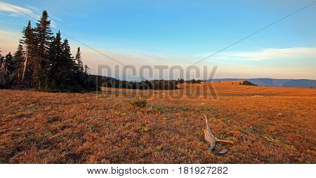 Meadow and dead stump at sunrise on Sykes Ridge in the Pryor Mountains in Montana USA