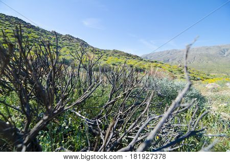 Blooming desert behind dry bush - natural background