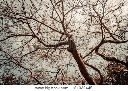 Big tree with white sky in vintage tone with vignet
