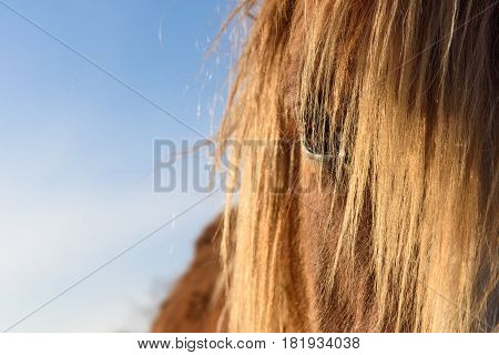 A brown horse with a fair mane looks at you.