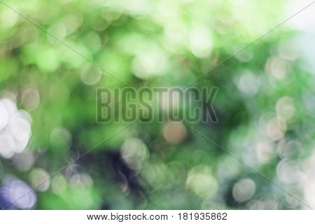 Green natural Bokeh blurred bokeh abstract backgrounds