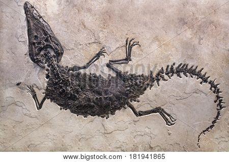 Dinosaur fossils on sand stone background- detail.