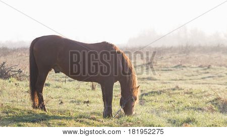 The Horse Is Grazing In The Fog In The Spring