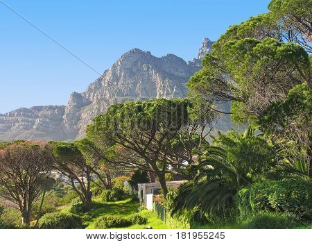 LANDSCAPE, TREES IN FORE GROUND WITH MOUNTAIN IN THE BACK GROUND 19bbnvh