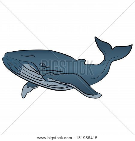 Vector cartoon clip art illustration blue whale isolated on white background