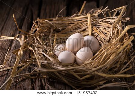 Chicken Eggs In The Straw In The Morning Light
