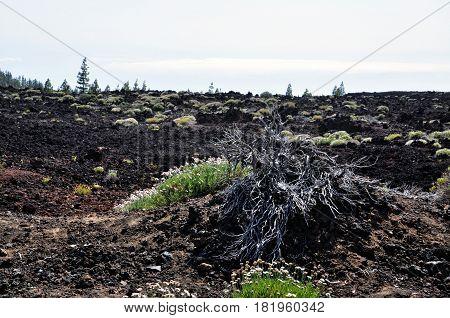 View of volcano Teide. Tenerife island, Spain.