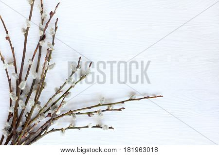 Flat lay spring sets pussy-willow twigs on a light wooden surface Top view / Easter holiday