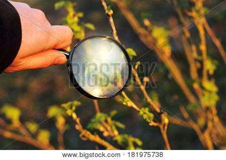 gardener sees green shoots through a magnifying glass at sunset / closer thorough inspection