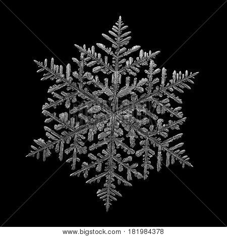 Macro photo of real snowflake: large and complex snow crystal of fernlike dendrite type with fine symmetry, six long, ornate arms with lots of side branches. Black and white version. Snowflake isolated on black background.