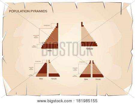Population and Demography, Illustration of Detail of Population Pyramids Chart or Age Structure Graph on Old Antique Vintage Grunge Paper Texture Background.