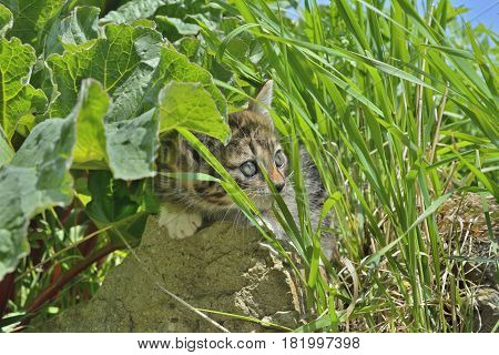 A close up of the small kitten in the middle of grass.