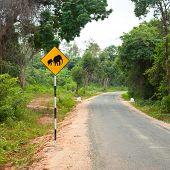 Elephants crossing the road sign in Sri Lanka poster