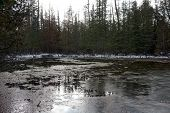 A view of the swamp in the Richard H. and Lydia Naas Raunecker Preserve in Harbor Springs, Michigan, during November. poster