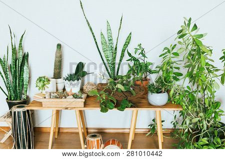 Plants In Pots. Indoor Plants In A Modern Cozy Interior.