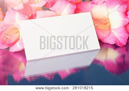 Spring background with gladiolus flowers. Gladiolus spring flowers and white card with free space for text on the glass surface, flower spring composition